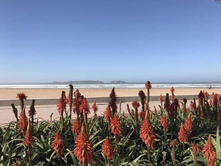 Immobilier en Vente à Essaouira