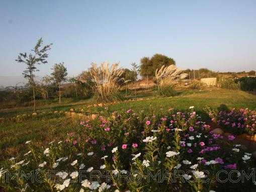 Terrain arboré avec un puits dans la campagne d'Essaouira