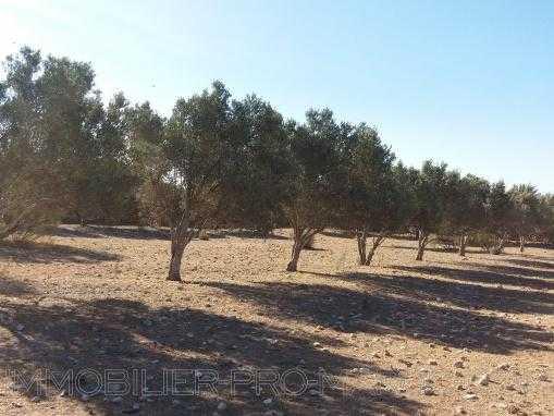 Terrain de 10 000m² à 6 Kms d'Essaouira
