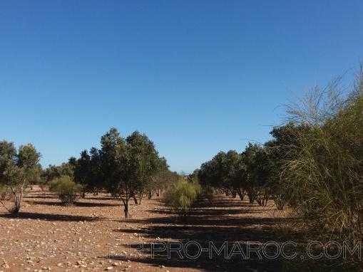 Terrain de 22200m² à 6 Kms d'Essaouira