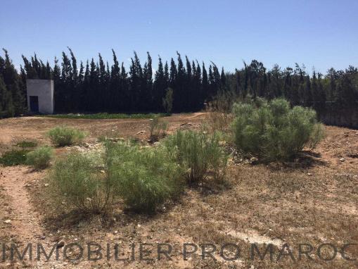 TERRAIN titré à seulement 8 Kms d'Essaouira