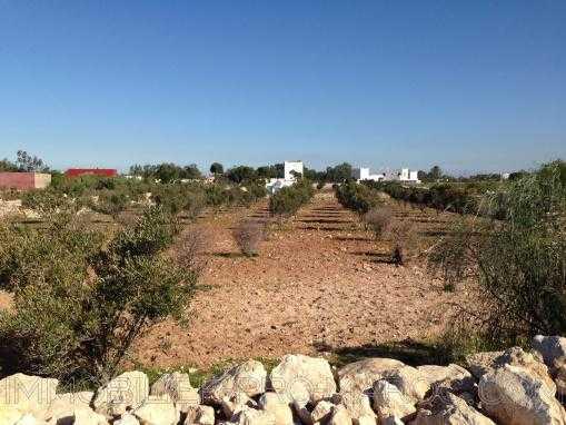 Terrain titré et clôturé de 5000m² à 8 Kms d'Essaouira