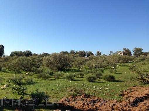 TERRAIN de 5300m², titré, vu dégagé sur la campagne à 8 Kms d'Essaouira