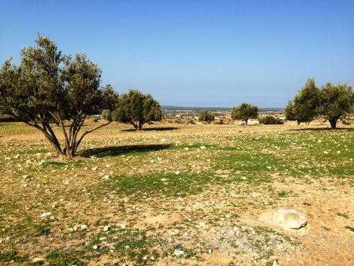 TERRAIN de 10Hectares titré, à seulement 14 Kms d'Essaouira