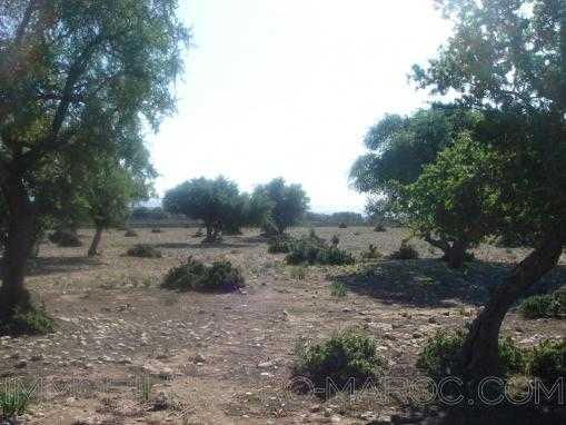 TERRAIN 2 hectares àIda Gourd avec vue sur l'atlas au milieu des arganier