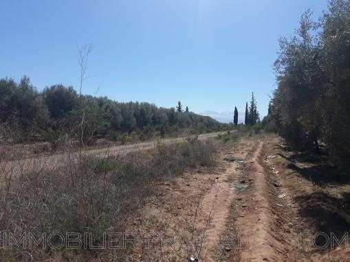 Terrain au coeur d'une oliveraie 300dhs/m2